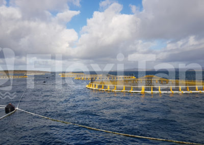 Kingfish aquaculture cages with liners