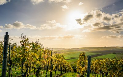 Cost cutting opportunities for Australia's winery industry with floating solar power